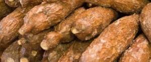 manióka