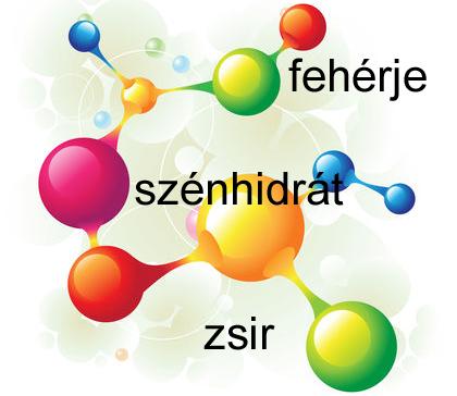 diéta makrotápanyagok protein por fogyáshoz