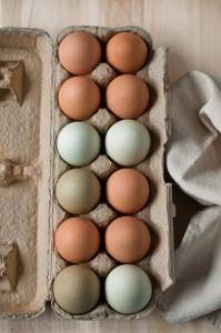 tojás vásárlás