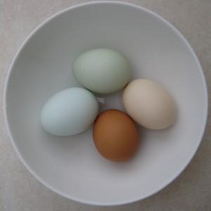 tojás héj